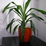 Idealer Platz für Topfpflanze zum Überwintern.
